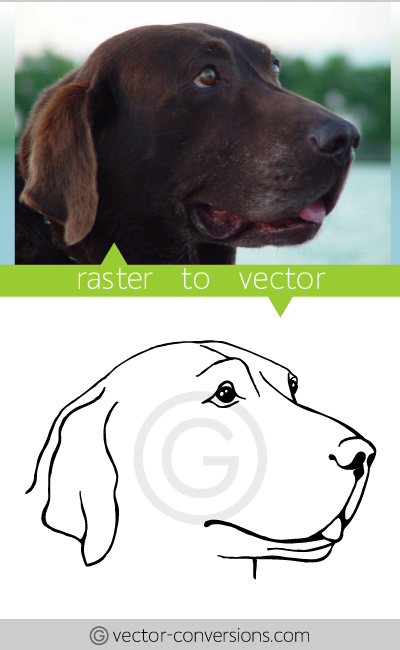 Vector Conversion from photo to vector lineart