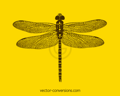 Vector drawing of a dragonfly for printing on reusable water bottles