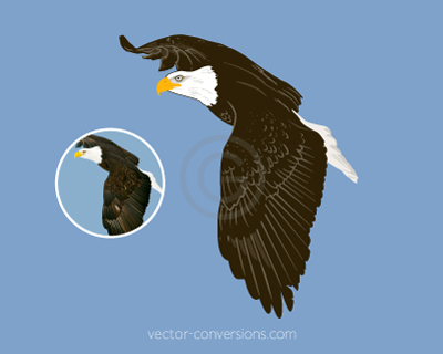 Vector drawing of an eagle for resale purposes