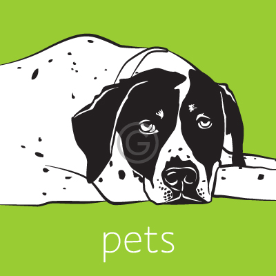 Vector drawings of pets made from photos