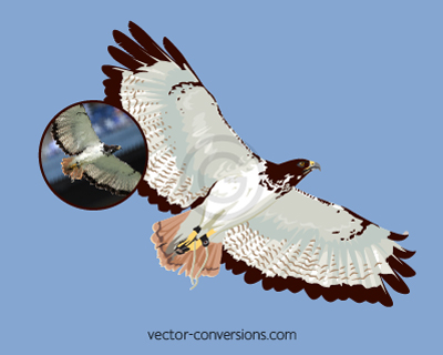 Vector drawing of a hawk for specialty promo items