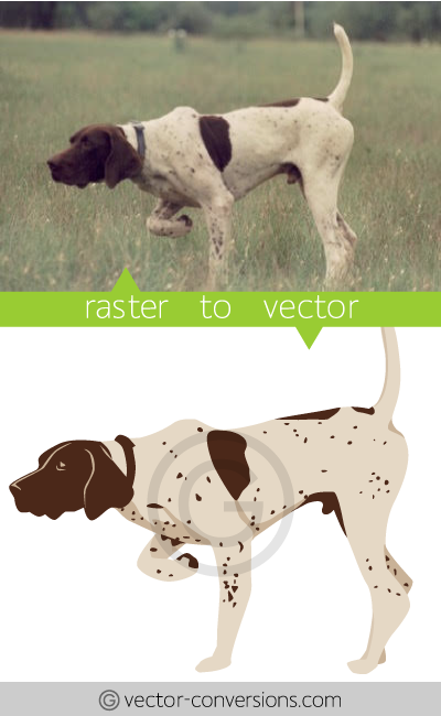 Vectorization sample from photo to vector drawing