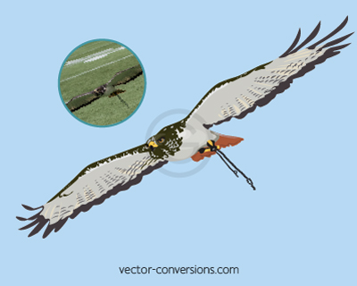 Vector drawing of Taima the hawk for custom products
