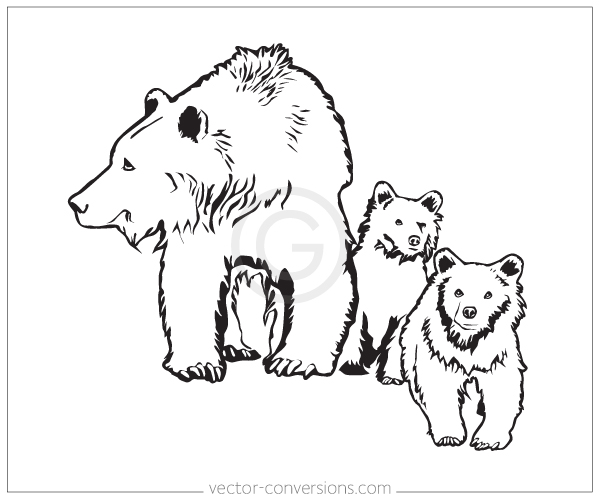 vector drawing of grizzly bear and cubs